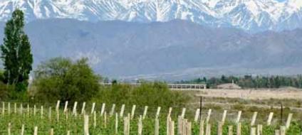 智利葡萄酒的锁定收获