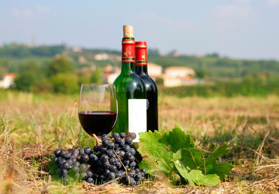 风土为什么能影响葡萄酒的品质?