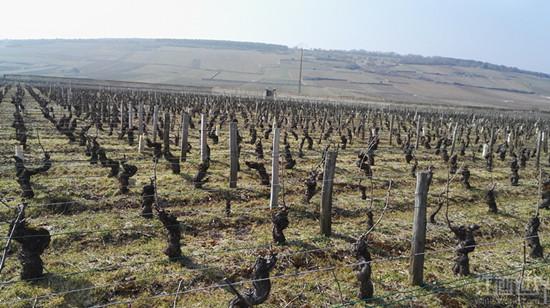 霜雹来袭,法国葡萄酒大减产