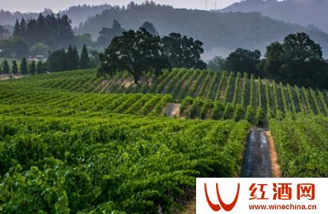 有机葡萄酒和生物动力葡萄酒有什么区别
